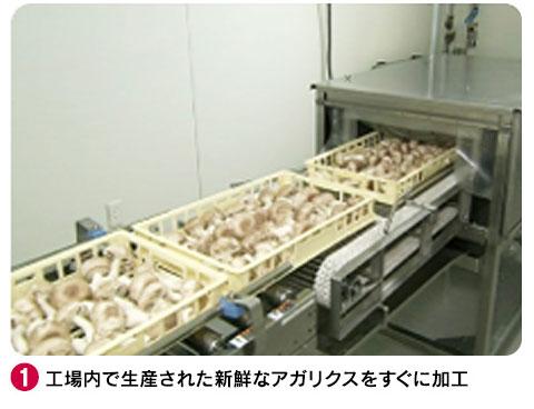 1 工場内で生産された新鮮なアガリクスをすぐに加工