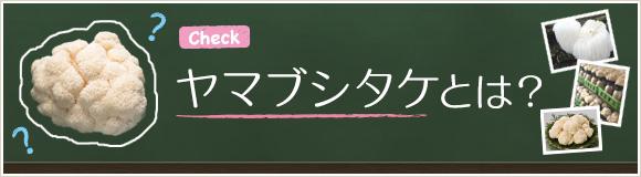 ヤマブシタケとは?